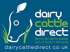 Dairy Cattle Direct